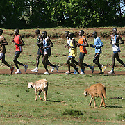 Kenyan long distance runners train in the high altitude village of Iten. The recent post-election violence in Kenya disrupted many runners' training programs, but they are now back in training for the upcoming Olympic games in China and other international events.  /// ..Kenyan runners practice their speed work at the Kamariny stadium in the high altitude village of Iten, in Kenya's rift valley.