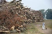 Nederland, Beuningen, 7-9-2013Grote stapels kaphout liggen in de uiterwaarden. Langs de Waal. Rijkswaterstaat maakt hier, evenals aan de overkant bij Lent, een nevengeul in de rivier om de waterafvoer bij hoogwater te verbeteren.Foto: Flip Franssen/Hollandse Hoogte