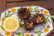Sea Urchin, Paracentrotus lividus, prepared for eating with half a lemon on a plate, Atlantic Coast, Rogil, Algarve, Portugal, southern Europe