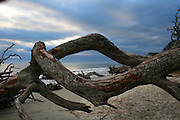 Dead driftwood trees on a gloomy Jekylly Island Beach forming a diamond shaped frame of the surf and horizon.