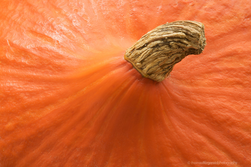 Top of Pumpkin and its wonderful textured surface