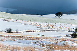 © Licensed to London News Pictures. 17/01/2015. Wintry landscape. There was overnight snowfall on high land in Mid Wales. Mynydd Epynt, Powys , Wales, UK. Photo credit: Graham M. Lawrence/LNP