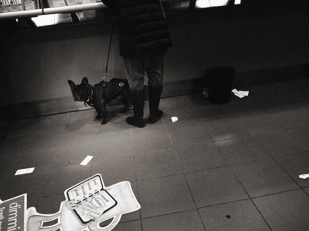 Street Photography, Italy, Lombardy, Milan, Milano, dark,dog