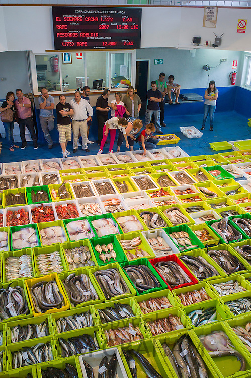 Fish auction at Confradia de Pescadores de Luarca, Confederation of Luarca Fishermen, at Puerto Luarca in Asturias, Spain