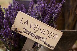 United States, Washington, Sequim,lavender for sale at annual Lavender Festival