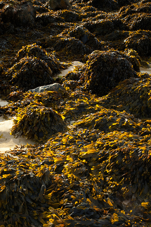 Zona intermareal (Tidal area). Playa Dail Beag Beach. Lewis Island. Outer Hebrides. Scotland, UK