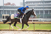 November 1-3, 2018: Breeders' Cup Horse Racing World Championships. Talismanic (GB), trained by Andre Fabre, exercises in preparation for the Breeders' Cup Turf