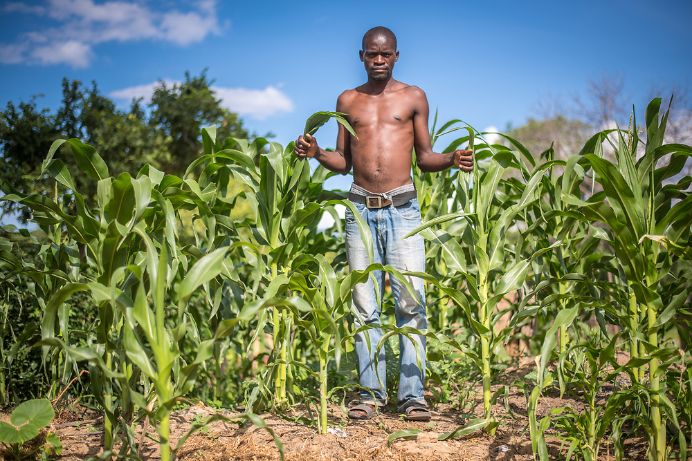 A young Zambian man stands with his crop of corn in a village in Livingstone, Zambia