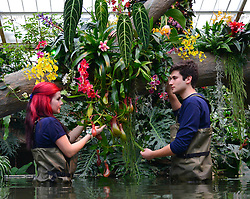© Licensed to London News Pictures. 02/04/14 About 125 jobs could be cut as the Royal Botanic Gardens in Kew, west London, faces a £5m shortfall in revenue in the coming financial year. FILE PICTURE DATED  06/02/2014. Kew, UK. Horticulturists Ellie (Left) and Alex arrange the displays. Orchids, the first festival on Kew's 2014 events calendar showcases thousands of exotic and rare orchids. The tropical display can be viewed at The Princess of Wales Conservatory, where it's always hotter than 21°C, Kew Gardens, Saturday 8 February to Sunday 9 March 2014. Photo credit : Stephen Simpson/LNP
