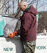 Jim Judson of the Department of Environmental Conservation's Bureau of Fisheries moves a net full of trout from his truck to a bucket so the fish can be stocked in the Neversink River in Cuddebackville on Wednesday, March 30, 2011.