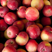 Early season apples for sale in August at a farmstand in Concord, MA