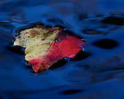 Image of a leaf in water