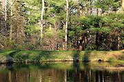 Mesick Pond