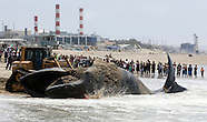 Dead Whale on Los Angeles beach