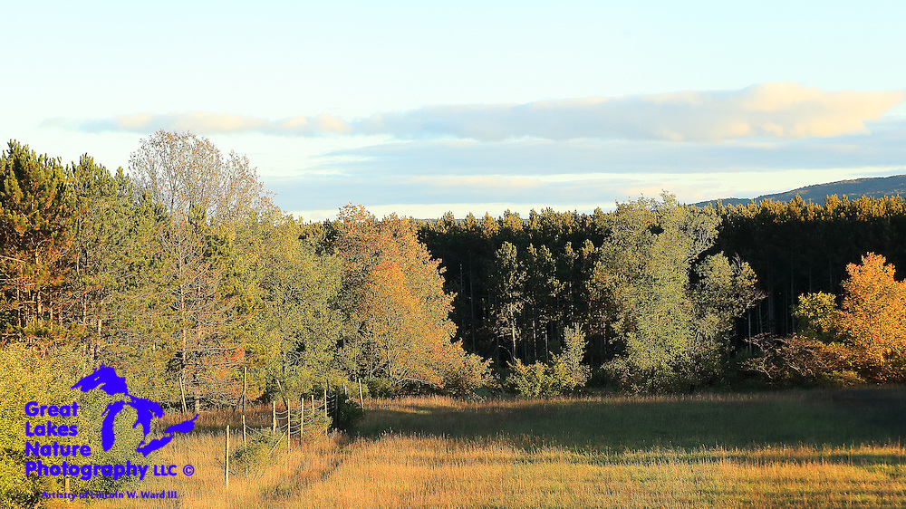 Early fall colors are just starting to be revealed in this Wexford County meadow in the late afternoon.