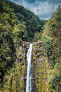 Akaka Falls on the Big Island of Hawaii - a 442 foot waterfall