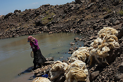 Syria.<br /> Women washing fair amounts of wool in a small pond between Hama and Idlib province.<br /> <br /> [Syria's Daily Life] Women clean wool in a pond between the countryside of Hama and Idlib., Syria,<br /> 15th June 2013<br /> Picture by Daniel Leal-Olivas / i-Images