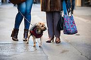 A fashionable dog on the streets of Avignon, France. © Brett Wilhelm