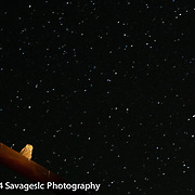 Great horned owl at midnight. Along the shores of Bear Lake Utah/Idaho 2014