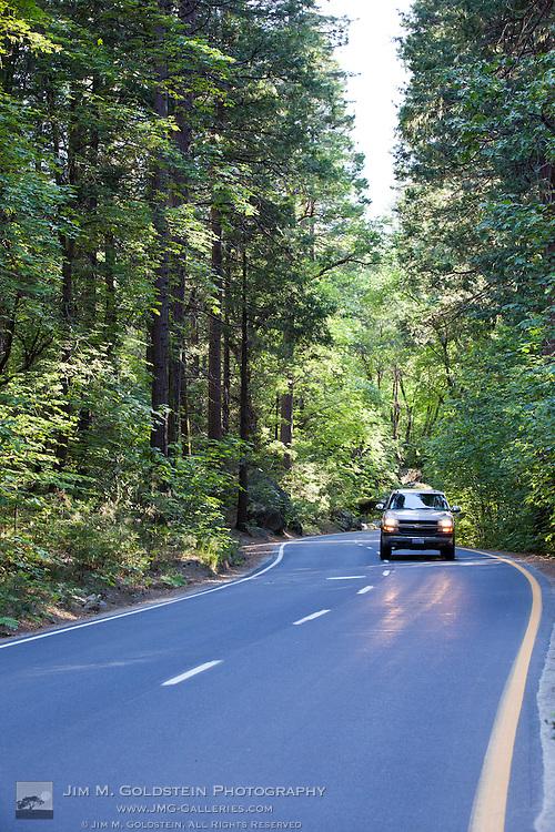 Spring greenery lines Yosemite Valley Loop Road - Yosemite National Park, California