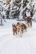Musher Mark Hartum competing in the Fur Rendezvous World Sled Dog Championships at Goose Lake Park in Anchorage in Southcentral Alaska. Winter. Afternoon.