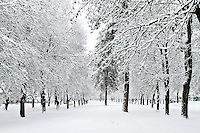 Snow covered trees lining a boulevard