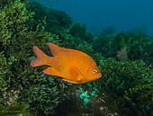 San Diego, USA Underwater