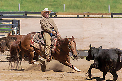 Cutting horse and rider in competition.<br /> <br /> Cutting is an equestrian event in the western riding style where a horse and rider are judged on their ability to separate a single animal away from a cattle herd and keep it away for a short period of time.<br /> <br /> The horses involved are typically Quarter horses, although many other stock horse breeds may be used. A cutting horse is an athletic and willing animal that is trained to instinctively keep a cow from returning to the herd.<br /> <br /> In the event, the horse and rider select and separate a cow (typically a steer or heifer) out of a small group. The cow then tries to return to its herd; the rider loosens the reins (&quot;puts his hand down&quot; in the parlance) and leaves it entirely to the horse to keep the cow separated, a job the best horses do with relish, savvy, and style. A contestant has 2 &frac12; minutes to show the horse; typically three cows are cut during a run, although working only two cows is acceptable. A judge awards points to the cutter based on a scale that ranges from 60 to 80, with 70 being considered average.
