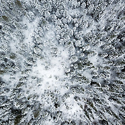 Fir trees covered in an early season snowfall in Wyoming.