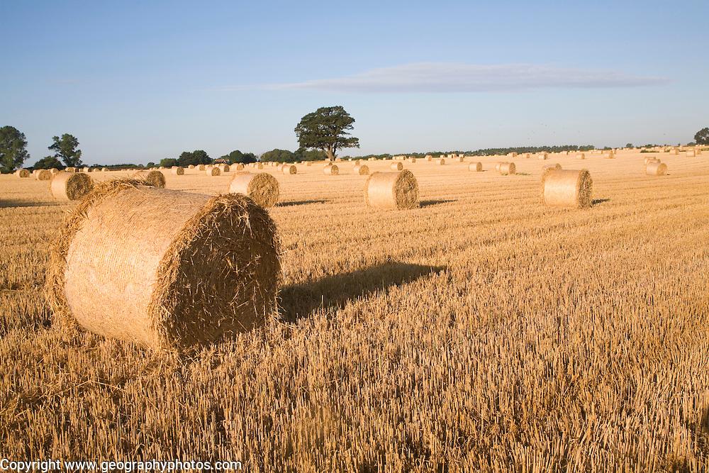 Straw bales in harvested field, Shottisham, Suffolk, England