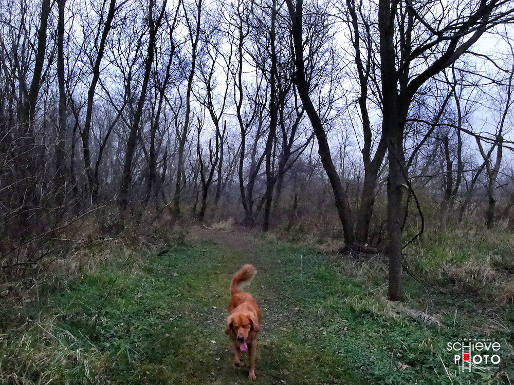 Dog walking in the woods.