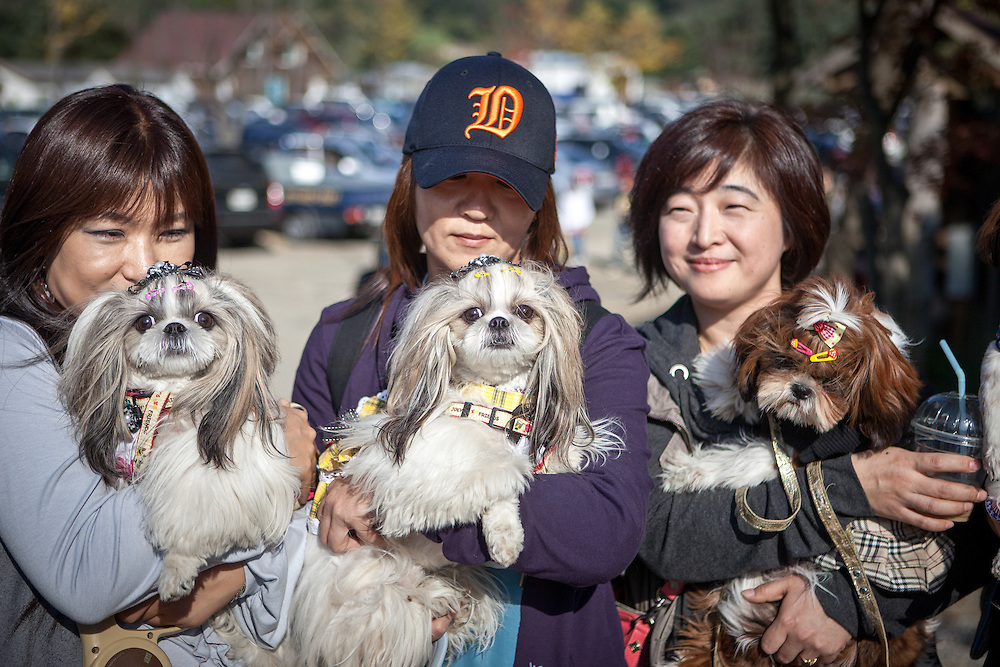 "Three Korean dog owners with their styled Pekingise dogs at ""Herb Island"" an amusement park located in Pocheon not far away from the Korean capital Seoul."