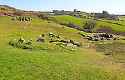 Drombeg stone circle, County Cork, Ireland, Irish Republic roundhouse Fulacht fiadh structure in foreground