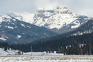 Abiathar Peak towers above the Lamar Valley in the northeast corner of Yellowstone, while 4 bison graze below.