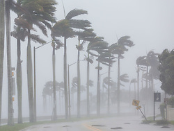 September 11, 2017 - Florida, U.S. - Flagler Drive is raked by wind, rain and water from the Intracoastal Waterway in West Palm Beach Sunday afternoon, September 10, 2017 as winds from Hurricane Irma rake the county. (Credit Image: © Lannis Waters/The Palm Beach Post via ZUMA Wire)