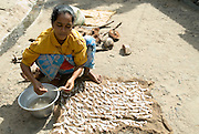 Woman drying fish on a street in Patinacherry near Nagapattinam.
