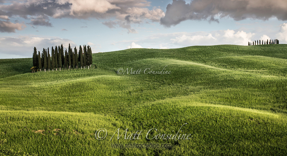 Two copses of pines between rolling hills. (Photo by Travel Photographer Matt Considine)