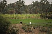 Nile River Valley, Egypt