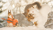 """EXCLUSIVE<br /> Photographer Pictures Squirrels With Tiny Musical Instruments Through Kitchen Window<br /> <br /> Some years ago, squirrels started to come to photographer Geert Weggen's  garden, He decided to build an outside studio from a balcony and started to shoot photos his kitchen window, Some days upto 6 squirrels visit Geert daily.<br /> <br /> This year Geert worked on an idea for a children's book, """"Squirrel Teaching You The Alphabet"""", and was confronted with some letters like an object starting with an """"X"""". That became a squirrel photo with a xylophone. From there Geert started doing a series of squirrel photos with music instruments. """"It took months to get some music instruments with the right size. I try to bring some magic, wonder and happiness with my work"""", these are real photos. Sometimes I take away a wire or some food.<br /> <br /> Photo Shows: TOP PERFORMANCE....red squirrels in snow with ice squirrel flower and violin <br /> ©Geert Weggen/Exclusivepix Media"""