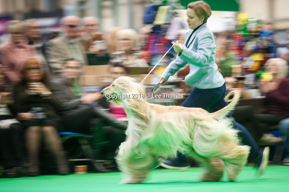 NEC, BIRMINGHAM, ENGLAND, UK. 9th MARCH 2018. Pictured:  An Afghan Hound is paraded in front of the judges. / First held in 1891, Crufts is said to be the largest show of its kind in the world, the annual four-day event, features thousands of dogs, with competitors travelling from countries across the globe to take part and vie for the coveted title of 'Best in Show'.  // Lee Thomas, Tel. 07784142973. Email: leepthomas@gmail.com  www.leept.co.uk (0000635435)