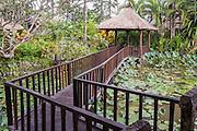 Lotus Pond surrounding Puri Le Mayeur Suite.