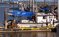 Fishing Boats, Comox Harbour, Vancouver Island, Canada   Photo: Peter Llewellyn