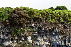 "View of Los Gemelos / ""The Twins"", one a pair of volcanic depressions, with Scalesia trees, Galapagos Islands National Park, Santa Cruz Island, Galapagos, Ecuador"