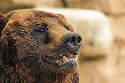 I swear, I'm Like A Teddy Bear, Come Closer...