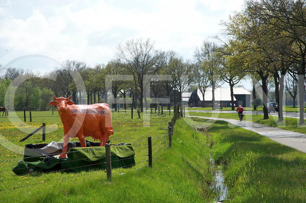 DALFSEN - Oranje koeien..De oranje koeien moeten weg.FFU PRESS AGENCY COPYRIGHT FRANK UIJLENBROEK.