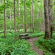 Smithgall Woods is a North Georgia State Park where visitors can hike, bike, camp, fish and golf.