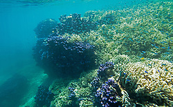 "Purple coral, staghorn coral and fish at ""The Aquarium"", Clerk Lagoon, Rowley Shoals."