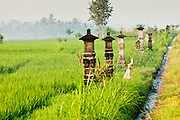 Apr 23 - BALI, INDONESIA - Hindu shrines mark the boundary of farmers' paddies in Bali. Rice is an integral part of the Balinese culture. The rituals of the cycle of planting, maintaining, irrigating, and harvesting rice enrich the cultural life of Bali beyond a single staple can ever hope to do. Despite the importance of rice, Bali does not produce enough rice for its own needs and imports rice from nearby Thailand. Photo by Jack Kurtz/ZUMA Press