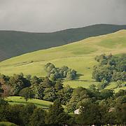 Sheep, Cumbria