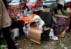 A dog belonging to Chinese residents camping outside their homes for fear of aftershocks in Lushan county of Ya'an, Sichuan Province, China, 21 April 2013. The Lushan Earthquake in Sichuan Province on 20 April 2013 resulted in 186 people dead, 21 missing, 11248 injured. About 1.72 million people were affected by the quake, while an initial estimate by the International Red Cross on Saturday put the number needing emergency shelter, water and food at 120,000. The China Earthquake Administration (CEA) recorded a magnitude 7.0 earthquake, while the US Geological Survey said it had measured 6.9.